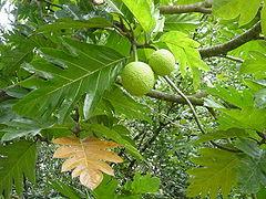 frutopan